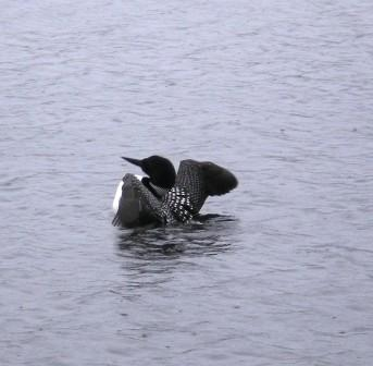 Loon Stretching