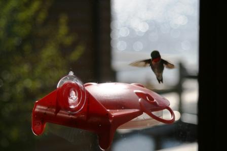 hummingbird3comp