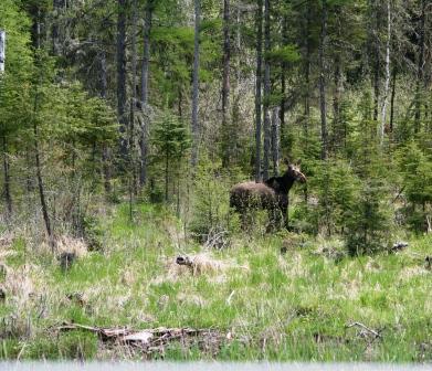 moose4comp