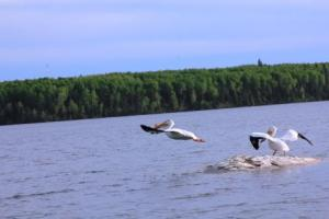 pelicanreadyfortakeoff