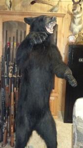 Verhoef bear