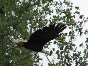 Eagle5