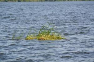dixiesfloatinggrass