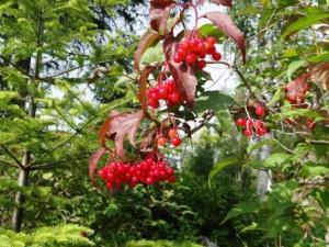 flower8redberry