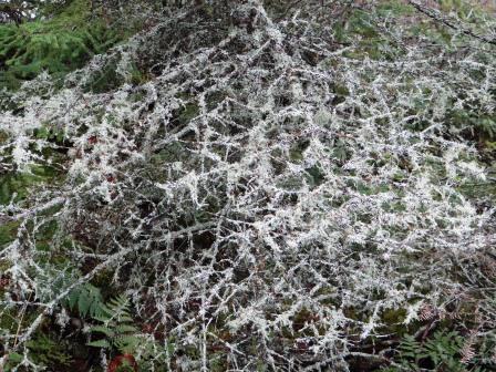 mossytreesspiderweb