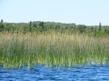 scenerygrass