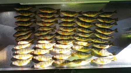 tableofperch