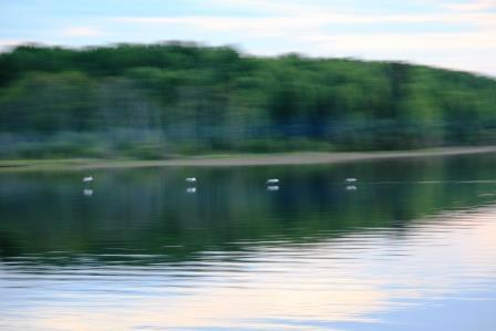 pelicansinmotion